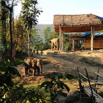 Rezerwat dla słoni