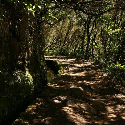 Madera - Funchal oraz lewady