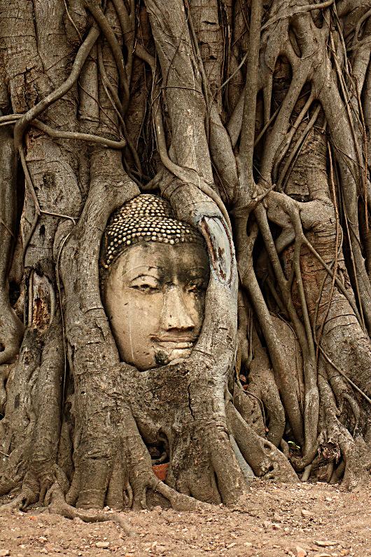 Głowa w drzewie