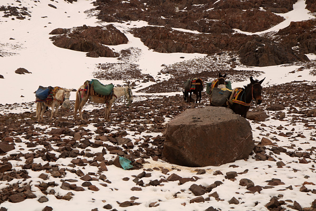 Atlas Wysoki: Refugio del Toubkal - Imlil