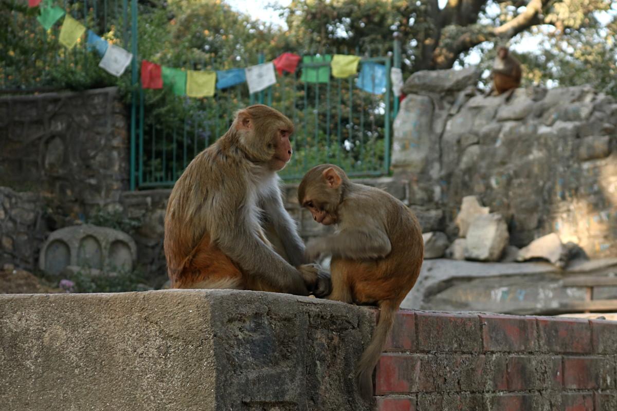 Kathmandu – Ratna Park oraz  Świątynia Małp