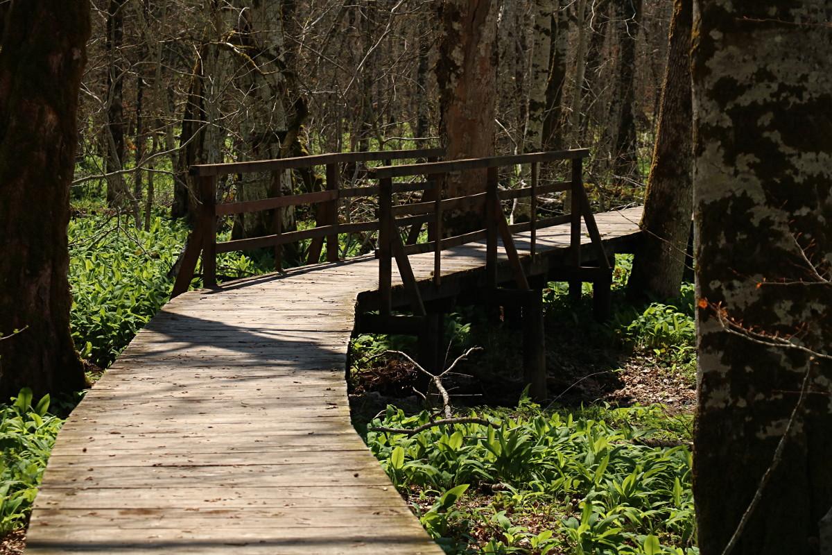 Po drodze efektowne mostki